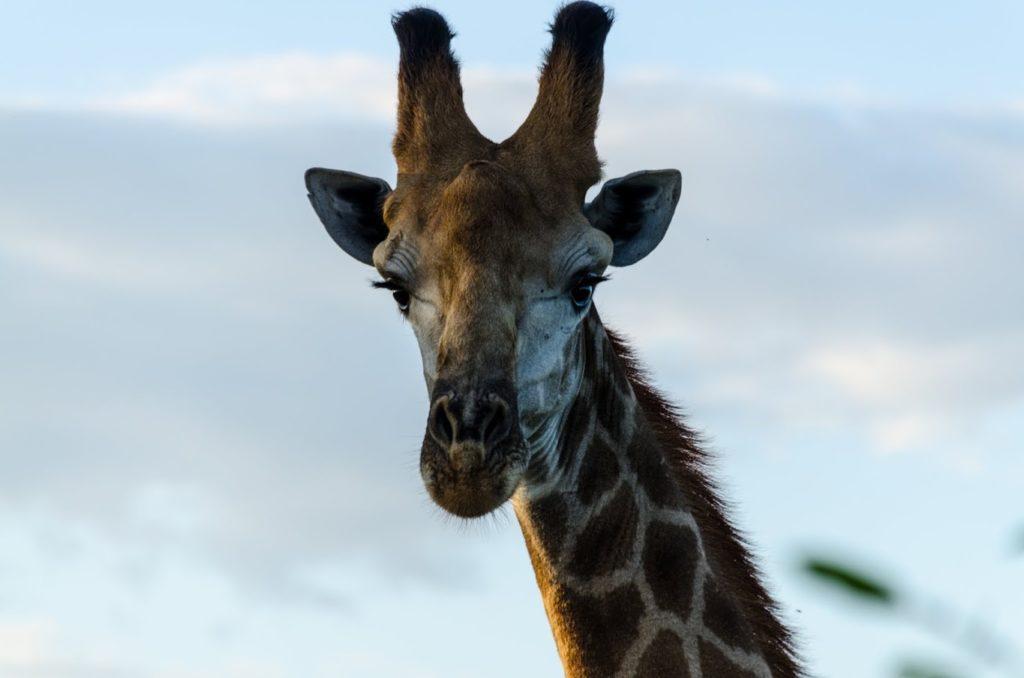 Sudafrica - Parco Kruger