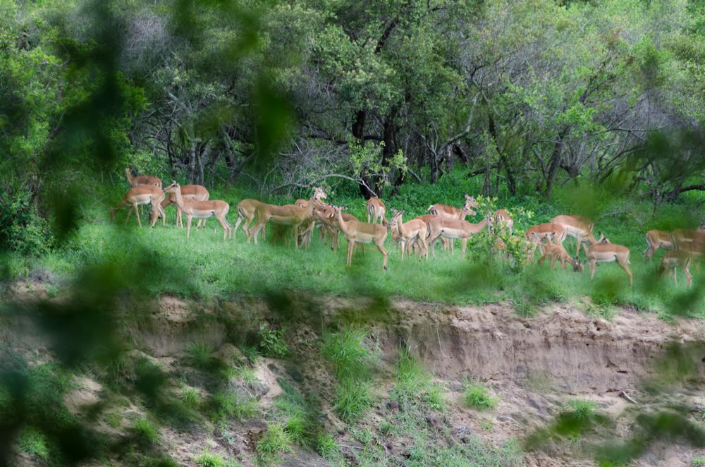 Tamboti, gli animali visti dalla veranda