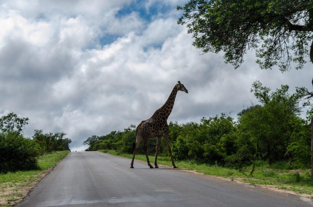 Kruger Park Sudafrica