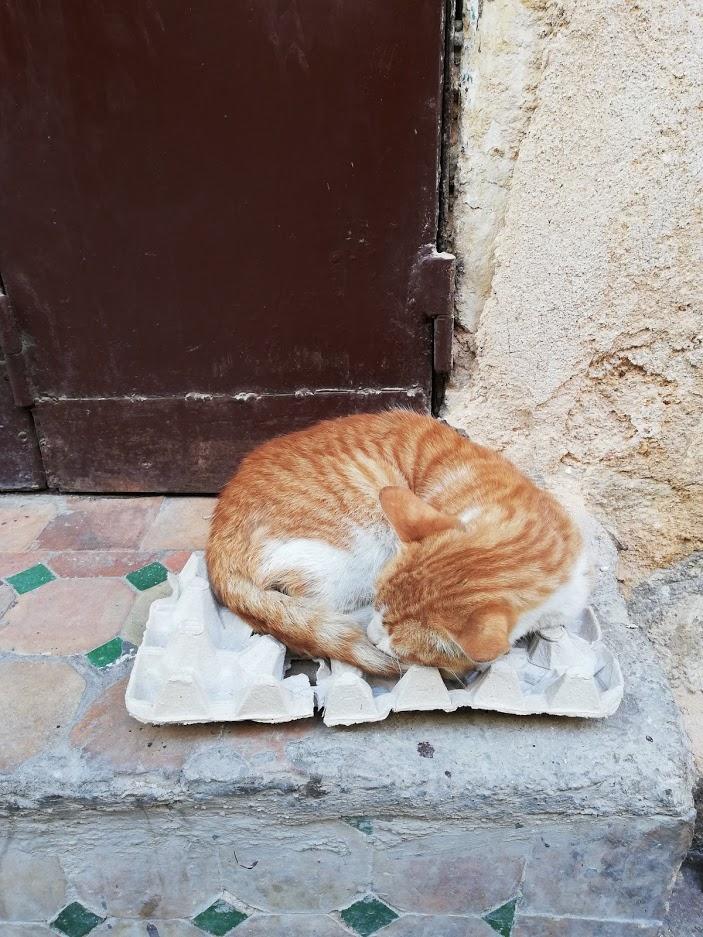 Gatto che dorme Fes